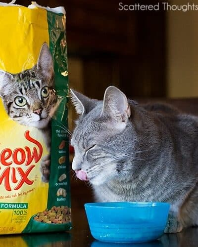 You (and your cat) Could Win a Trip to Hollywood!