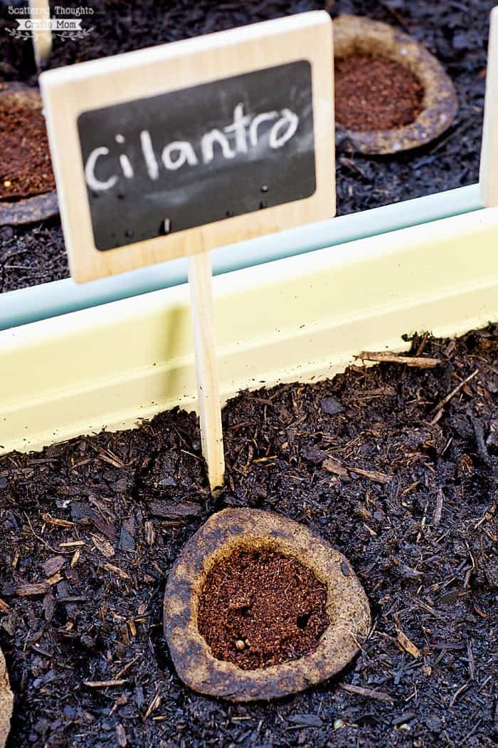 how to start a container garden.