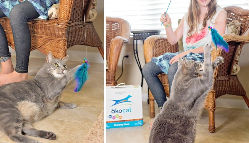 How to make a Feather Cat Toy