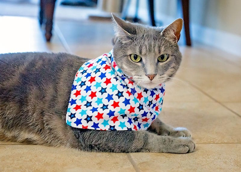 How to make a cat bib