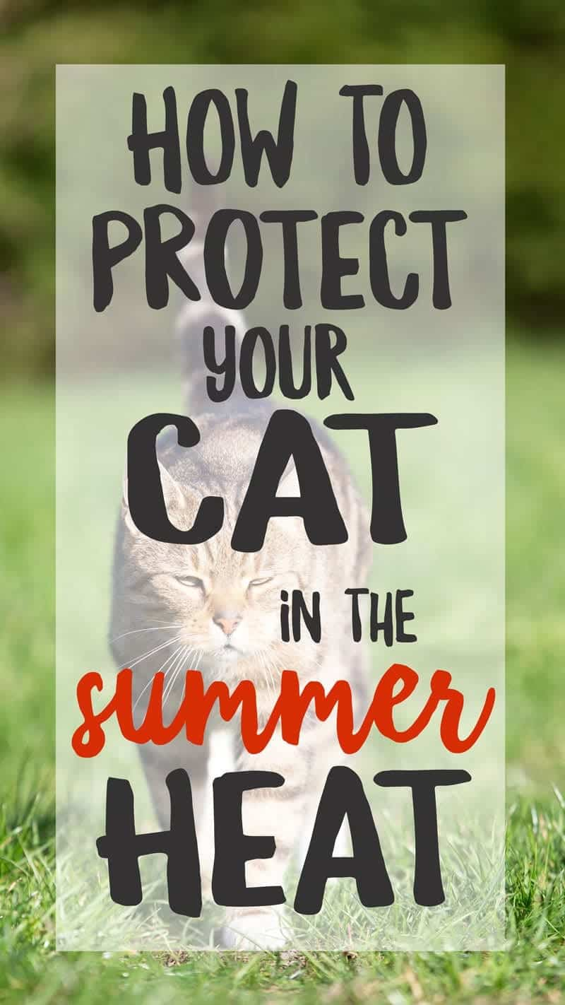 Protect cats fro the summer heat