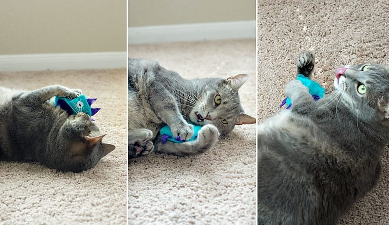 how to make a catnip toy