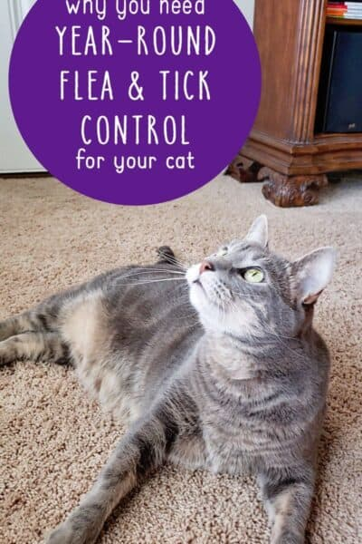 Mythbusting: Why you need Flea and Tick Control Year-Round For Your Cat