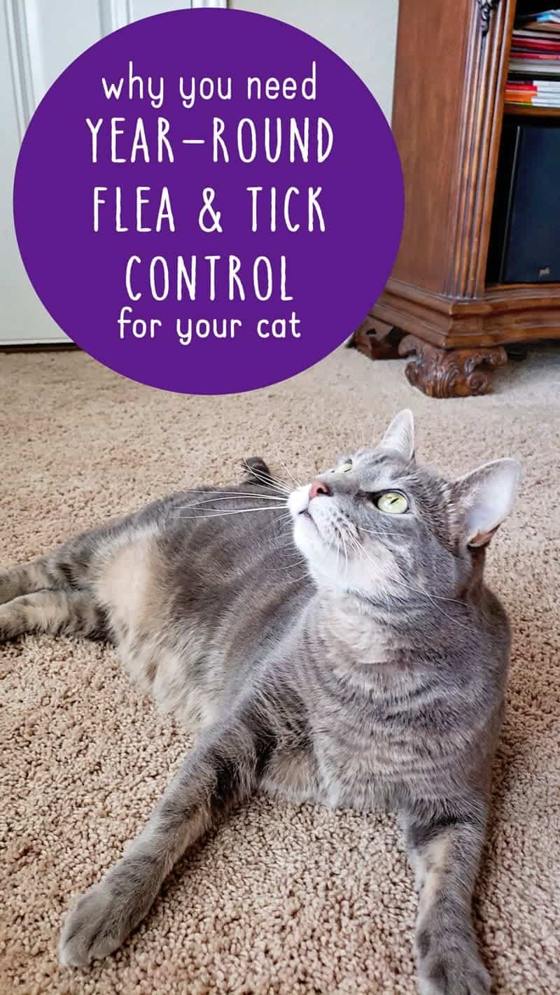 Mythbusting and why you need year round flea and tick control for your cat